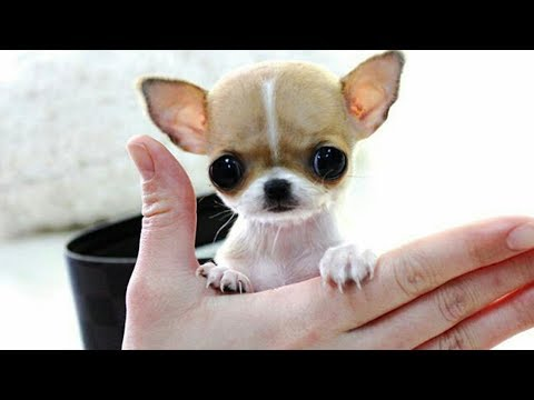 Cute is Not Enough - Funny Cats and Dogs Compilation #215