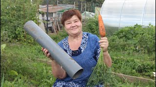 Не спешите выбрасывать остатки труб! Они спасут ваш урожай!