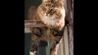 Кошка падает с 5 этажа