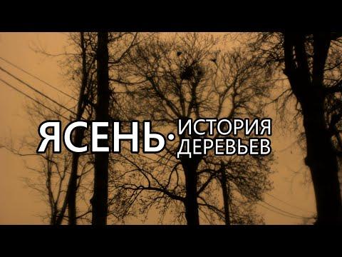 Ясень. История деревьев - Выпуск 1