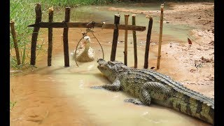 Terrifying ! Brave Boy Catch Crocodile While Go fishing - How to Catch A Crocodile In Cambodia