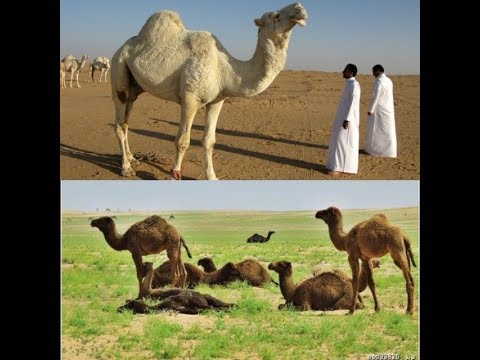 deserts-getting-green-in-saudi-arab-|-unbelievable-weather-changes