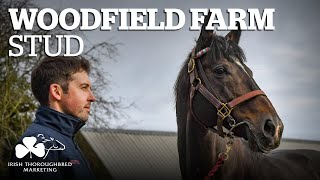 ITM Irish Stallion Showcase 2021 - Woodfield Farm Stud