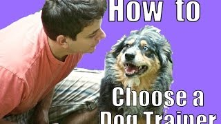 Things To Avoid When Choosing A Dog Trainer