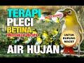 Terbaru Terapi Pleci Buka Paruh 1 Jam Suara Hujan Pleci Betina Ngriwik(.mp3 .mp4) Mp3 - Mp4 Download