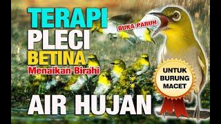 Download lagu TERBARU TERAPI PLECI BUKA PARUH 1 JAM MP3