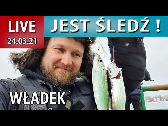 LIVE ➤ Akcja ŚLEDŹ - we Władku jest go dużo...