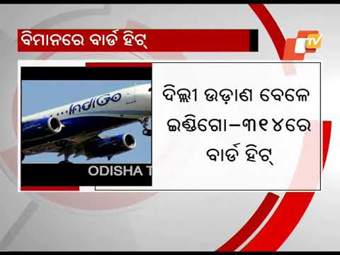 Bhubaneswar-New Delhi Indigo Flight Makes Emergency Landing After Bird Strike