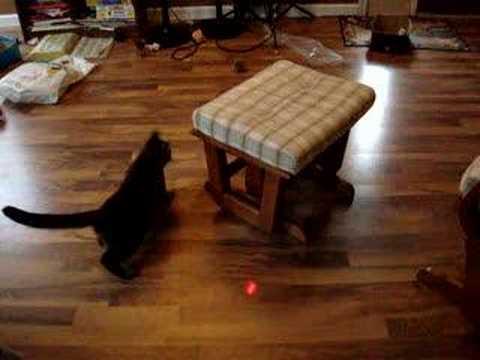 Spastic cat chasing laser pointer light