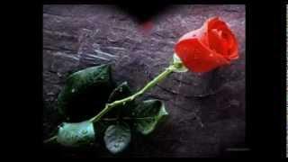 Sinan ÖZEN - Kapına Kırmızı Bir Gül Bıraktım