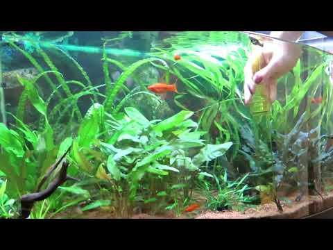 Как часто делать подмены воды в аквариуме?