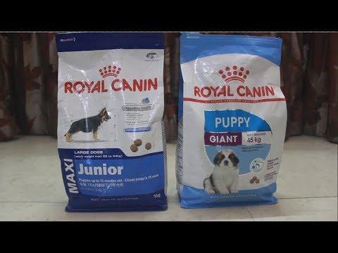 royal canin dog food    royal canin giant    royal canin maxi    royal canin feeding    roxie   