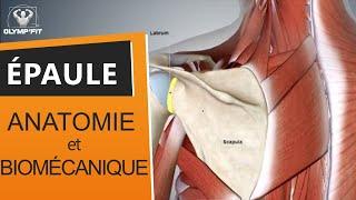 Épaule : Rééducation et Prévention [Partie 1] bursite, tendinite supra (sus) épineux, capsulite