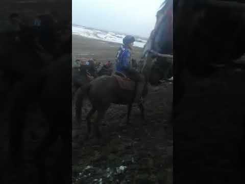 Кок бору командасы Ноокен району капитан команда Бегалы палбан первое место  🏇🏇🏇🏇🏇