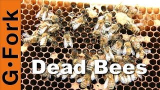 Dead Hive & Winter Feeding : Beekeeping 101
