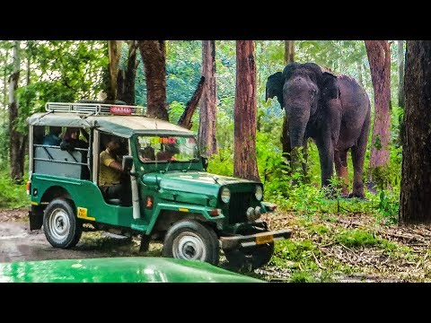 കാട്ടിലൂടെ ഒരു Jeep Safari | Wayanad Muthanga Forest Wildlife Sanctuary | Wayand