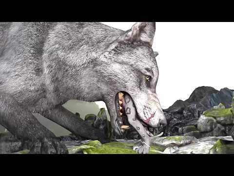 Feeding the Wolf - Feeding the Wolf