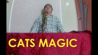 Коты любят шоколад! Кошачья магия.