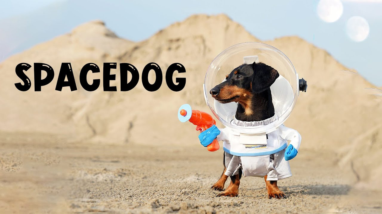 Download Ep 3: SPACEDOG Crusoe & The Giant Bone - (Funny Dachshund in Space!)