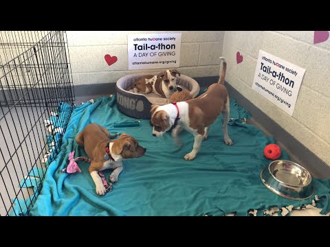 Adoptable puppies! | The Dodo Tranquil Tuesdays LIVE