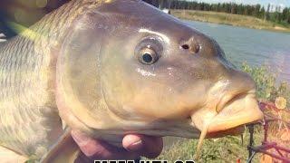 секреты рыбалки ловля крупного карпа в озерах  carp fishing