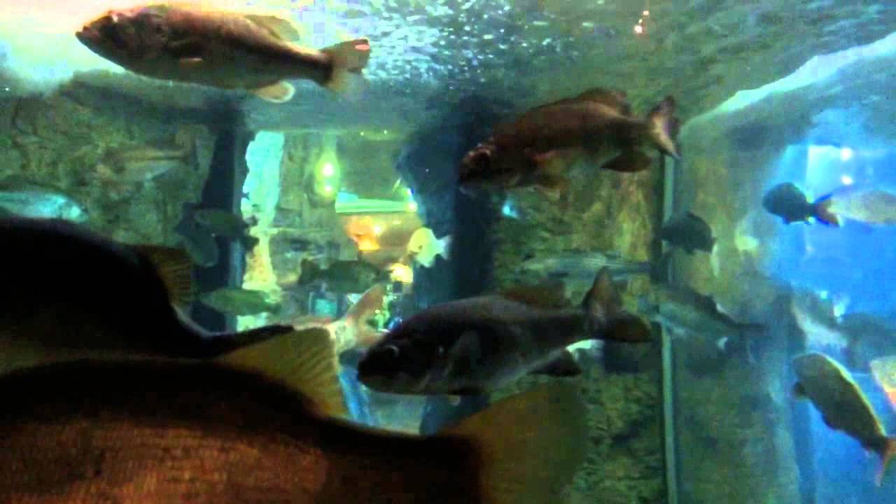 Fish tank and animals at bass pro shop phoenix youtube for I fish pro