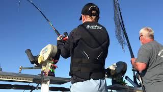 Lake Michigan King Salmon (HUGE FISH)