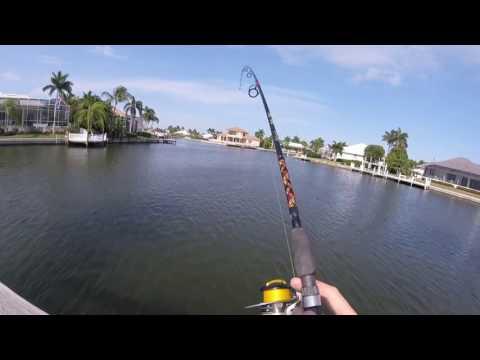Bullshark hooked in Florida canal!