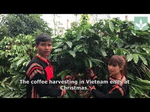 Christmas greetings Vietnam