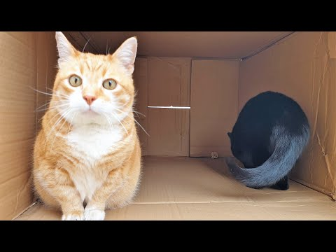 Cats Playing In Big Cardboard Box