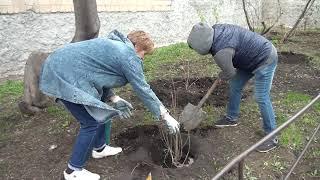 Новостной выпуск от 11.05.2021: «Сад Памяти»