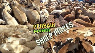 SHEEP PRICES IN PEBBAIR MARKET | JUDIPI, ORISSA, TELANGANA LOCAL SHEEPS