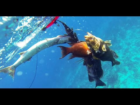 Chasse sous marine Gross Merou in CUBA - Chasse au trou - Ap