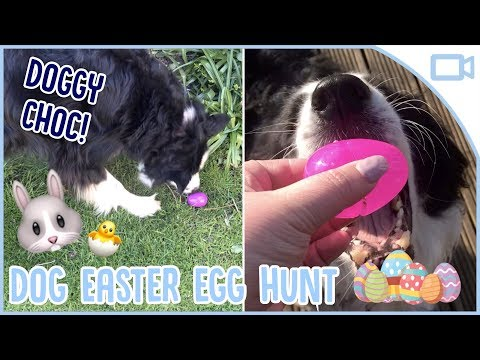 easter-egg-hunt/chocolate-(carob)-for-dogs!