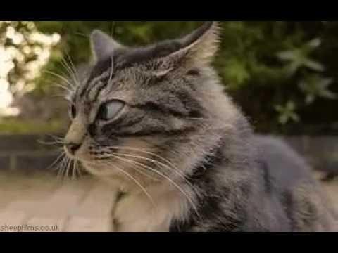 Пьяный кот и кошка