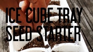 Ice Cube Tray Seed Starter