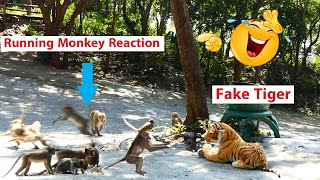 TRY TO NOT LAUGH CHALLENGE Must Watch New Funny Video 2020 By Fake Tiger Prank Monkey