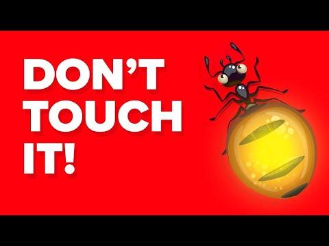 Inilah Alasan Mengapa Menggigit Semut