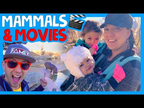 🦁ALBUQUERQUE ZOO FAMILY ADVENTURE 🎬 RV MOVIE NIGHT 🐊