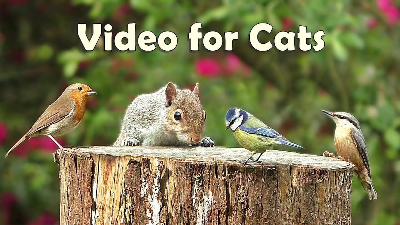 Video for Cats to Watch - 8 Hour Megamix ⭐