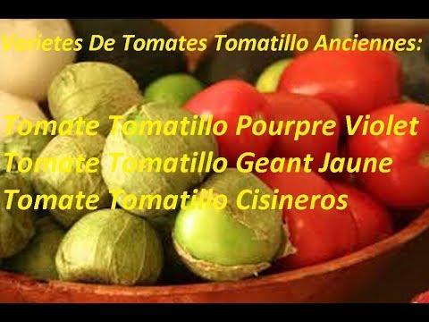 Variétés Tomates Tomatillo Anciennes:Tomatillo Cisineros-Pourpre Violet-Geant Jaune-Verde