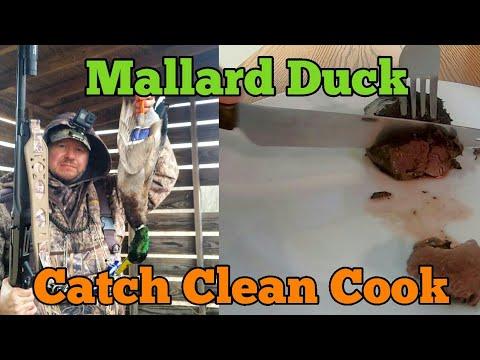Mallard Duck Catch Clean Cook