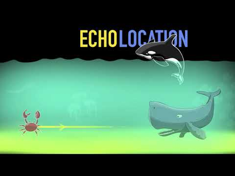How Do Bats Fly? (Echolocation & SONAR) (Hindi) | Physics | Khan Academy