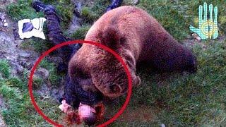 TOP 10 Adiestradores de Animales que Murieron Durante el Trabajo