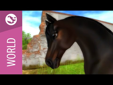 Star Stable World - Morgan Horse