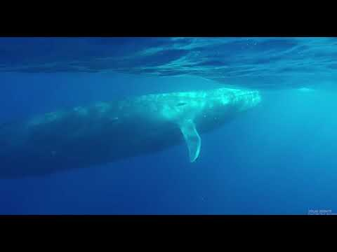 Sri Lanka Whales at Southern Indian Ocean