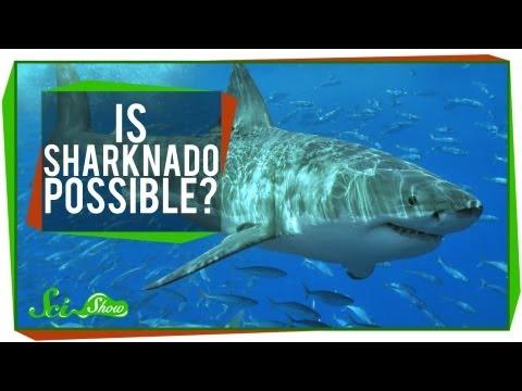 Is SHARKNADO Possible?