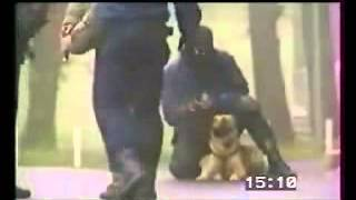 Police K9 Dog Attacks During Training