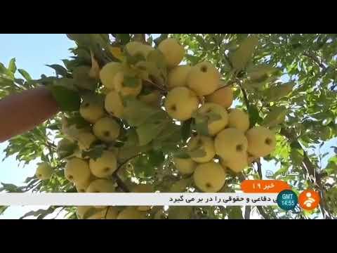 Iran Miniature fruit trees cultivation, Hamadan county كاشت درختان ميوه مينياتوري شهرستان همدان