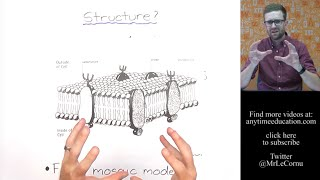 What is the Cell Membrane?